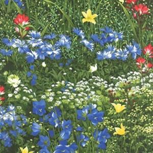 wildflowers-300x300